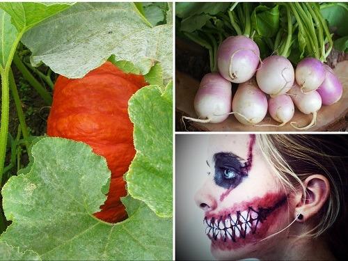 Origine et histoire des fêtes et traditions culinaires : Halloween en France