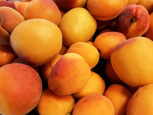 abricots français
