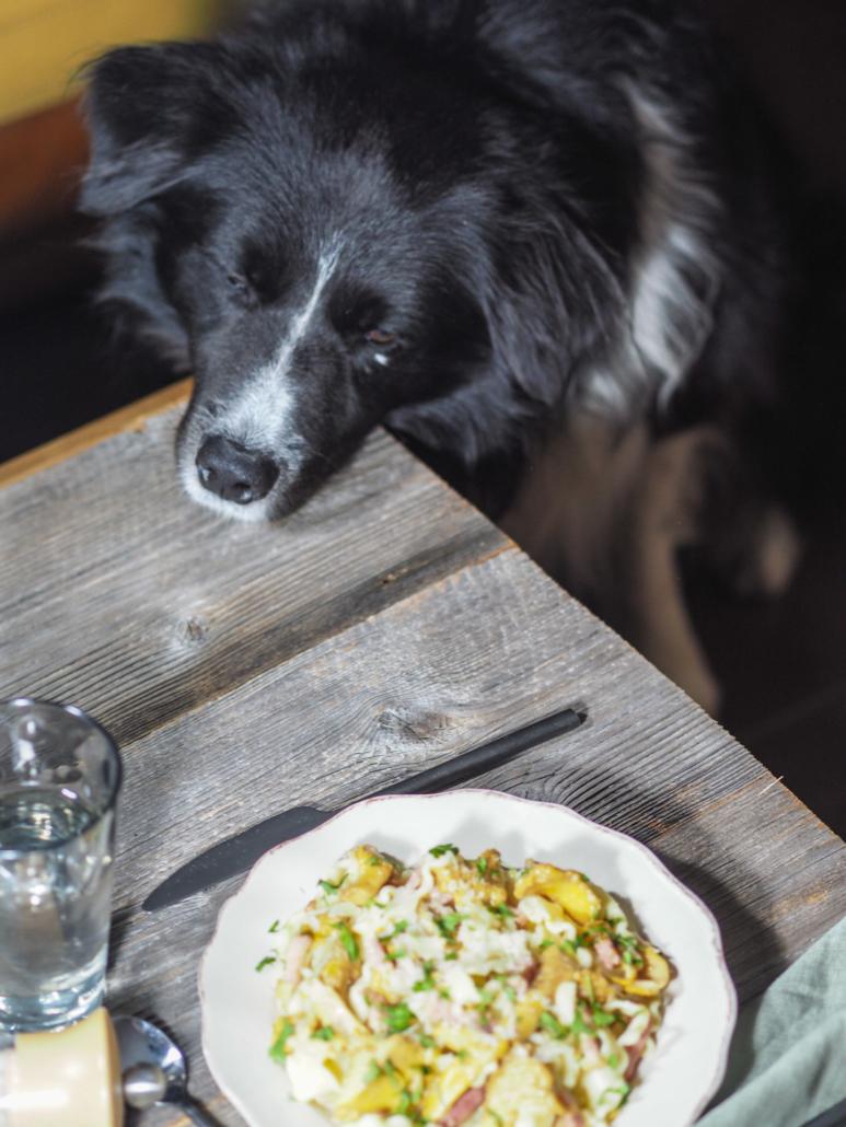 Mougly le chien veut passer à table
