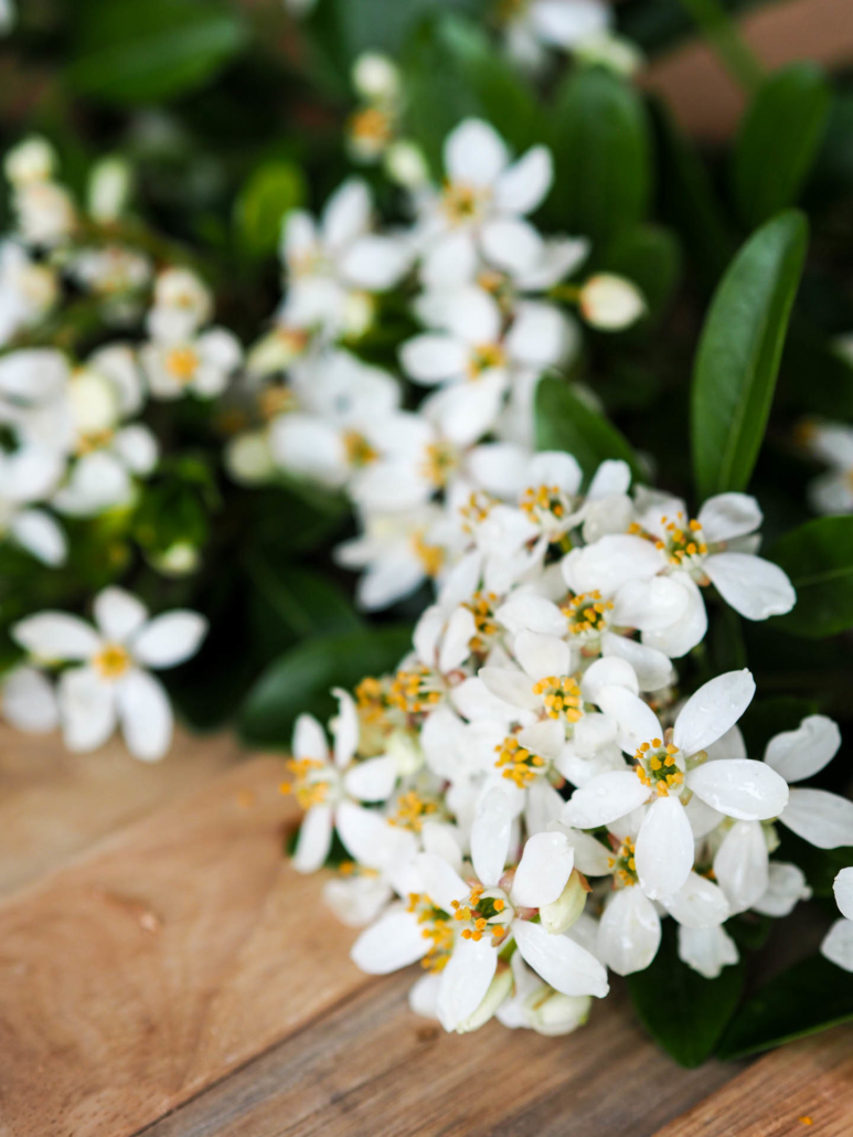 jolies fleurs blanches